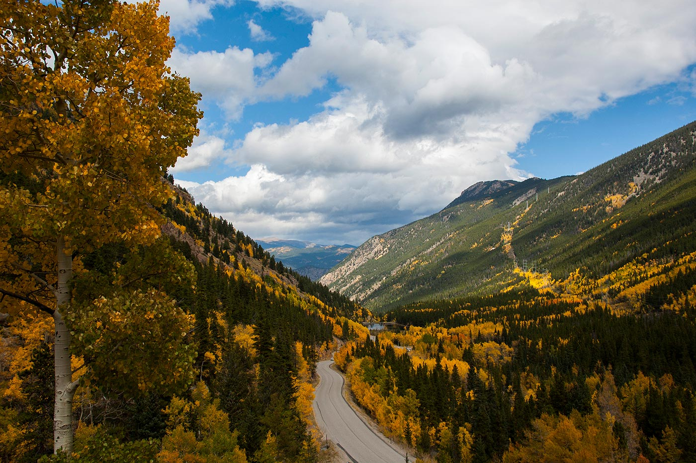 view of guanella pass and the vibrant yellow aspen leaves surrounding the road